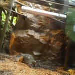 川崎水族館 カメの住処に設置